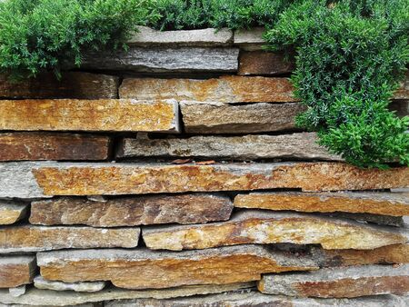 Garden decorative natural stone wall fence  with evergreen tree Banque d'images - 133062023