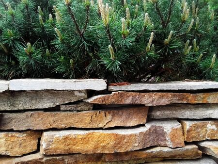 Decorative natural stone wall fence  with pine tree Banque d'images - 133061390