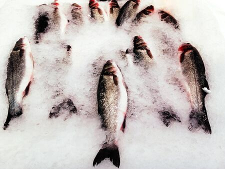 Whole trout  in the ice, ready for sale at fish market