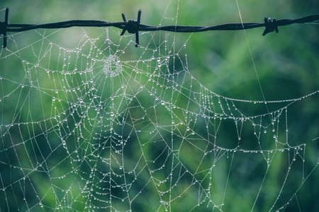 Spider web hanging on a barbed wire after the rain in the jungle. Standard-Bild