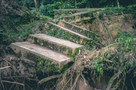 Ruined stairs among the foliage immersed in the jungle of Chiapas, Mexico.