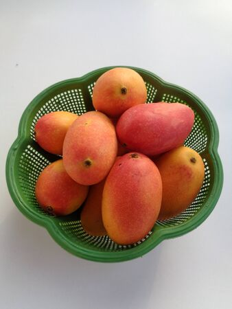 pelem podang suluh, podang mango (ripe on the tree). the indonesian exotic tropical fruits. the sweetest red mango