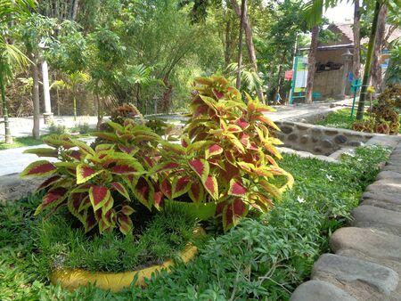 la belle fleur sur le jardin vert