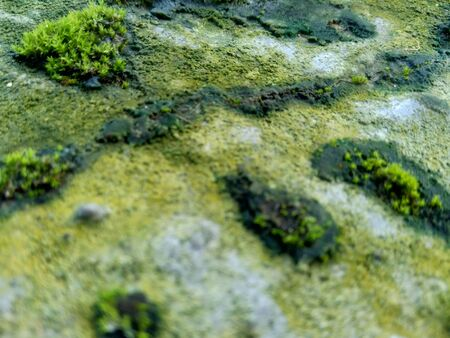 Mosses (bryophyte) on rocks, they are characteristically limited in size and prefer moist habitats Stock fotó