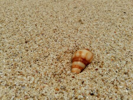 close up shell on the sand