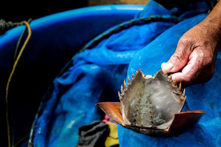folkways: king crab