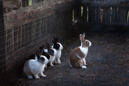 Rabbits in there paddock  Five rabbits in there paddock in a farm at daylight Reklamní fotografie