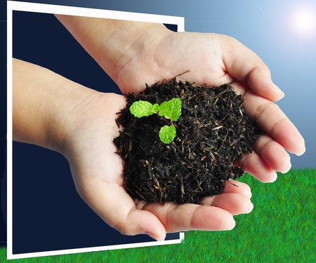 young growing plant holding in hand over green background Stock Photo