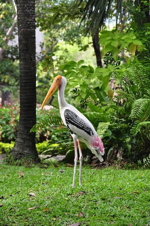 painted stork perched on a grass,khaodin, in thailand