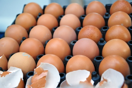 brown chicken eggs&eggshell in carton