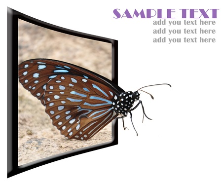 3d effect with butterfly out of the image.