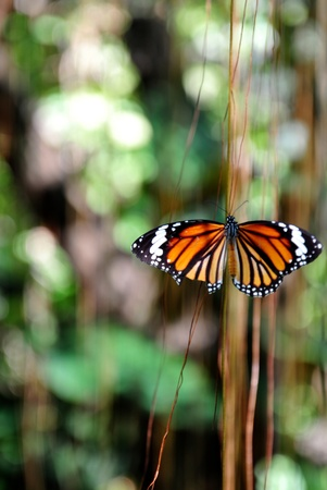 Colorful butterfly sitting on a vin. Stock Photo