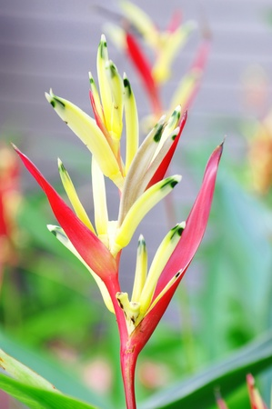 Bird of paradise plant against green background photo