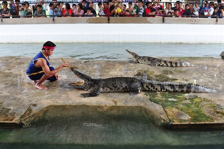 wrestlers: Crocodile wrestlers performing a show in January 2, 2012 in Nakom Pathom, Thailand.
