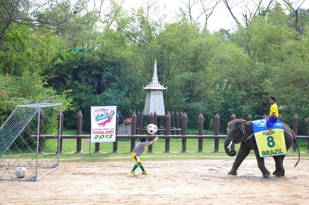 Elephant  show at Samphran Elephant Ground & Zoo, Thailand.   Stock Photo - 11729142