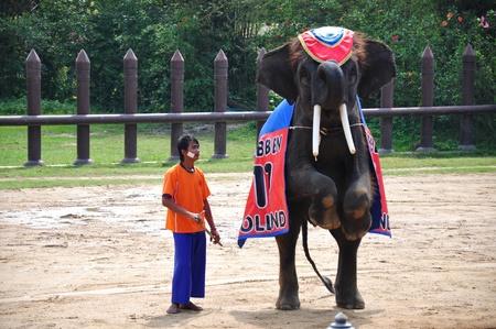 Elephant  show at Samphran Elephant Ground & Zoo, Thailand.   Stock Photo - 11729459