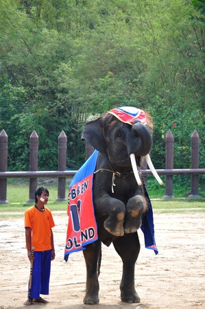 Elephant  show at Samphran Elephant Ground & Zoo, Thailand.   Stock Photo - 11729458