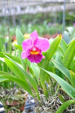 Beautiful orchids. Stock Photo