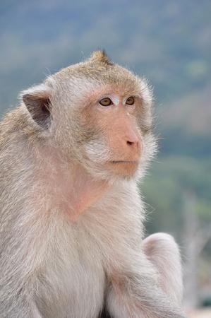 Close-up shot of the Monkey. Stock Photo - 11843247