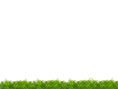 Close-up of grass isolated on white background  photo