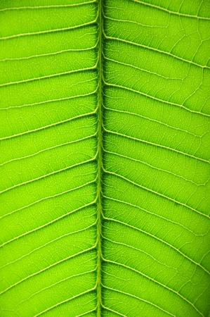 Detailed Green Leaf Macro Background Texture Stock Photo