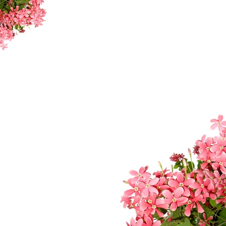 pink flower frame with copy space  Stock Photo
