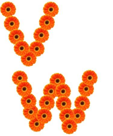 V,W  Flower alphabet isolated on white