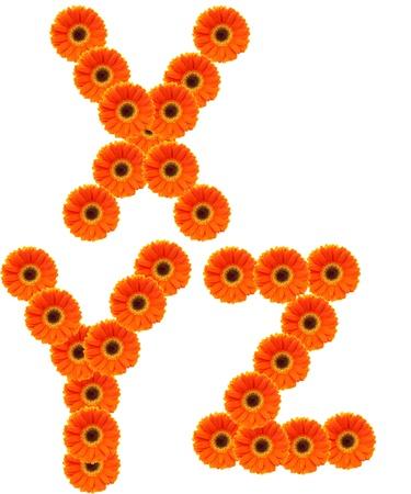 X,Y,Z  Flower alphabet isolated on white  Stock Photo