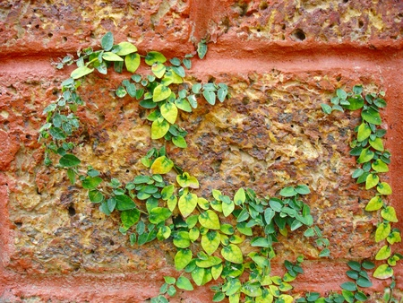 Plant little tree on old red bricks wall background