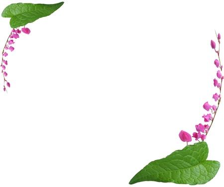bg: Flower frame on a white bg