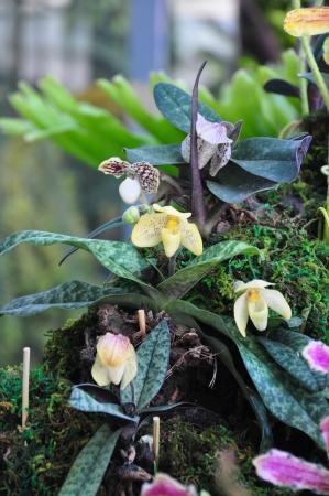 orchideae: 6th Siam Paragon Bangkok Royal Orchid Paradise 2012 at Thailand