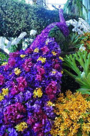 6th Siam Paragon Bangkok Royal Orchid Paradise 2012 at Thailand