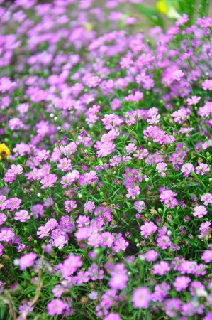 Close up of beautiful pink flower background  photo