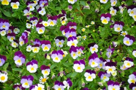 Flower nature garden bonsai background Stock Photo - 14219834