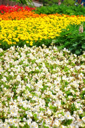 Colorful flower field taken from South Korea  Stock Photo - 14219845