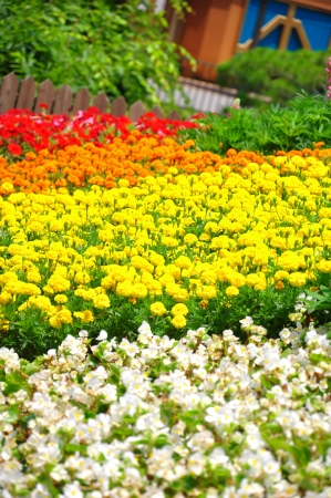 Colorful flower field taken from South Korea Stock Photo - 14219842