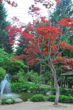 Garden  going through the park at Nami Island  Stock Photo