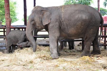 Elephant in Ayutthaya, Thailand Stock Photo - 14962631