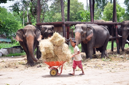 Boy having fun feeding an elephant in Ayutthaya, Thailand Stock Photo - 14962634