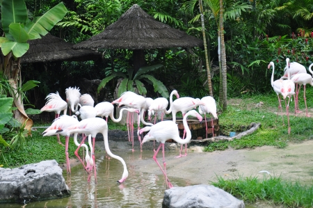 Beautiful flamingo is dringking in the lake Stock Photo - 14962635