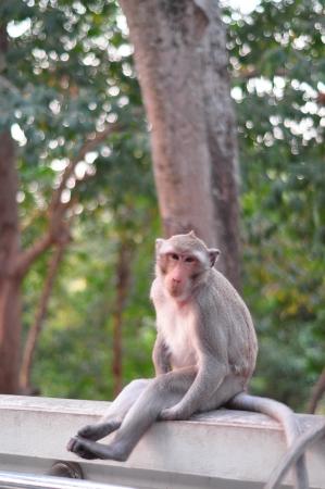 monkey portrait in Thailand photo