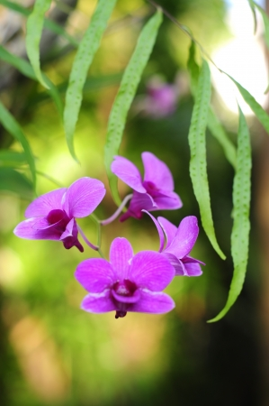 Beautiful purple orchids in garden Stock Photo - 18520564