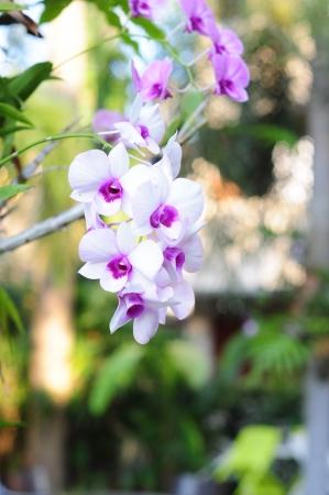 Beautiful white orchid Stock Photo - 18520565