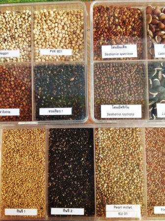 Assorted edible seeds arranged in box Stock Photo