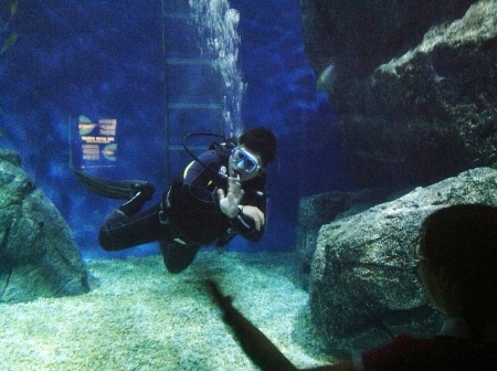 aqua: Diver moving underwater at siam ocean world in bangkok Thailand