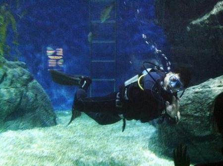 aqua: Diver moving underwater at siam ocean world in bangkok Thailand  Stock Photo