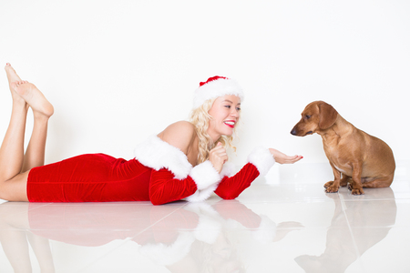 Woman in Santa Dress Asking Dog to Give Paw Stock Photo