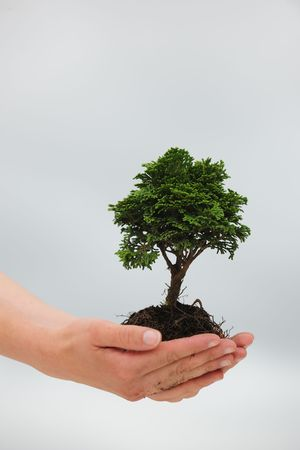 hand holding plant: woman holding a small tree in her hands