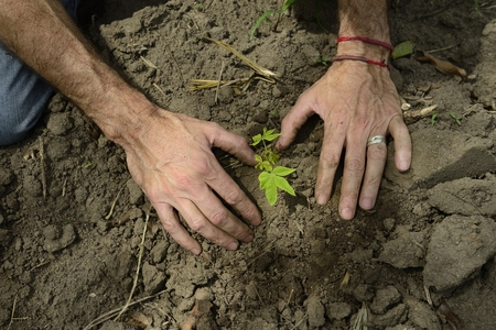 growth concept: close-up of male hands planting a small sprout photo