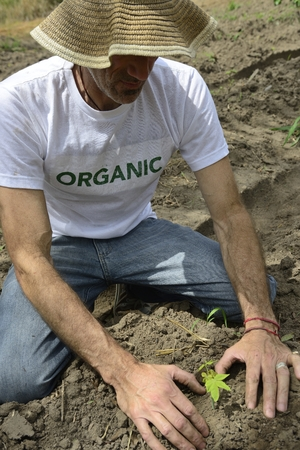 growth concept: organic farmer planting photo